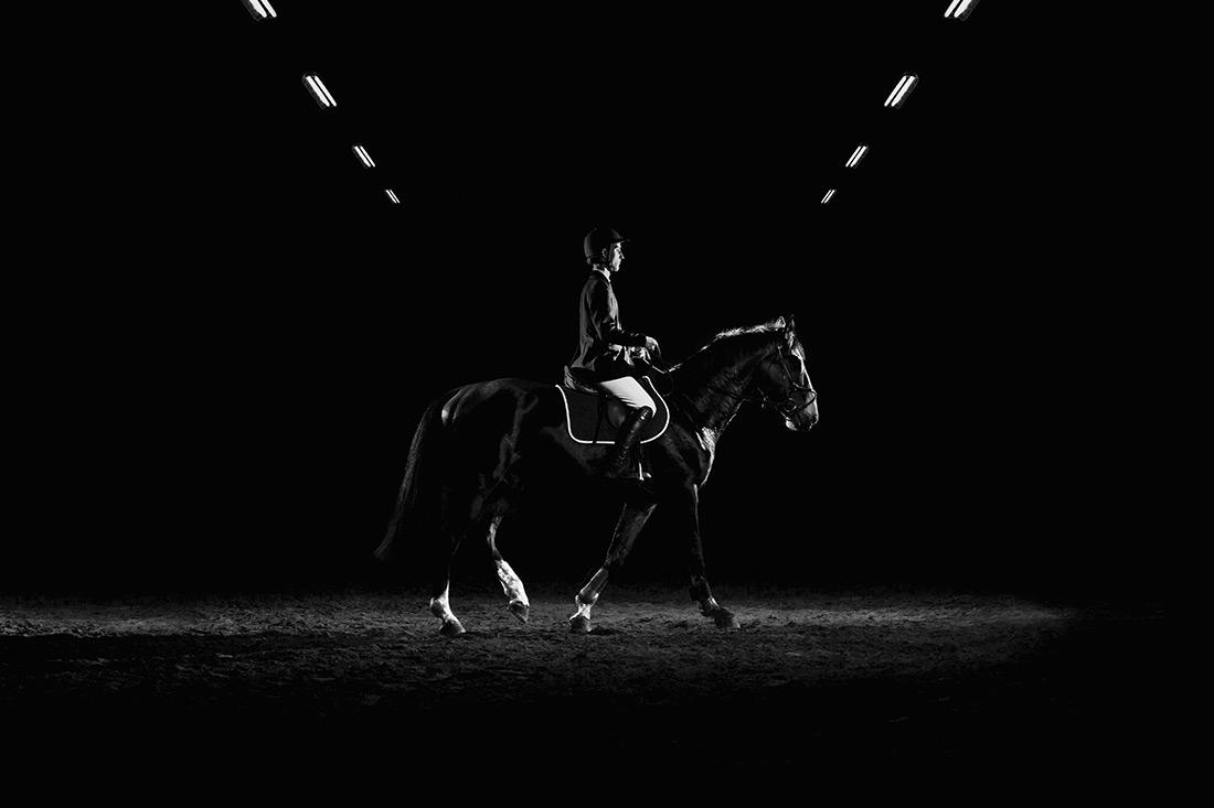 Cavalo Cavaleiro Viseu